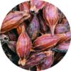 Gardénia florida gyümölcs